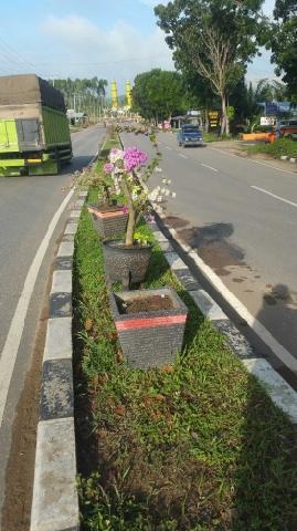 Kepala DPKP Sesalkan Tanaman Bunga di Jalan Jalur Dua Banyak yang Hilang