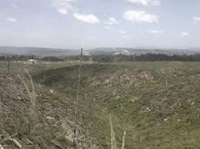 Tangkal Perambahan Hutlin, Dishut Bentuk KPHL Kuansing Selatan