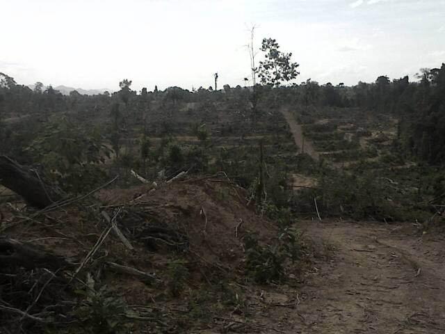400 Ha Lahan Ulayat Desa Pangkalan Indarung Diserobot Asen, Warga Deadline Segera Hengkang