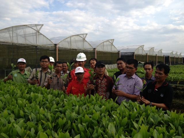 BSN Produksi 50 Juta Bibit Akasia dan Eucaliptus Pertahun