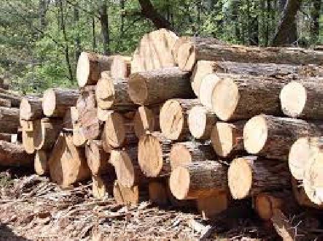 Polres Kuansing Amankan tiga Pelaku Illegal Logging di Lahan PT. RAPP