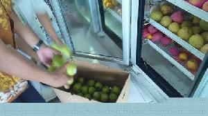 Hasil Uji Lab Dua Jenis Apel Amerika Negatif dan Tidak Mengandung Bakteri Berbahaya