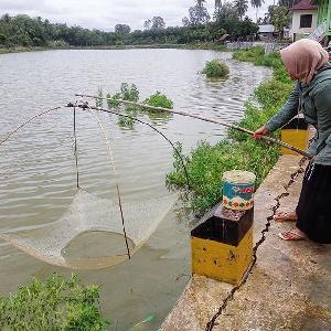 Gaet Pengunjung, Objek Wisata Danau Sungai Soriak Bakal Dilengkapi Angsa Dayung