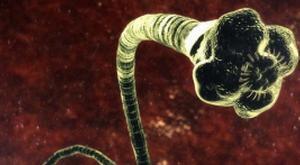 Hii.. Organisme Ini Pemakan Otak Manusia