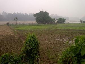 Terkena Dampak El-Nino, 600 Ha Lahan Sawah Masyarakat di Kuansing Terancam Fuso