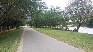 DLH Benahi Hutan Kota Pulau Bungin Jadi Kawasan Wisata di Teluk Kuantan