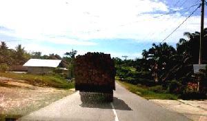 Illegal Logging di Bukit Tabandang HK Marak, PenertibanTersandung Dana